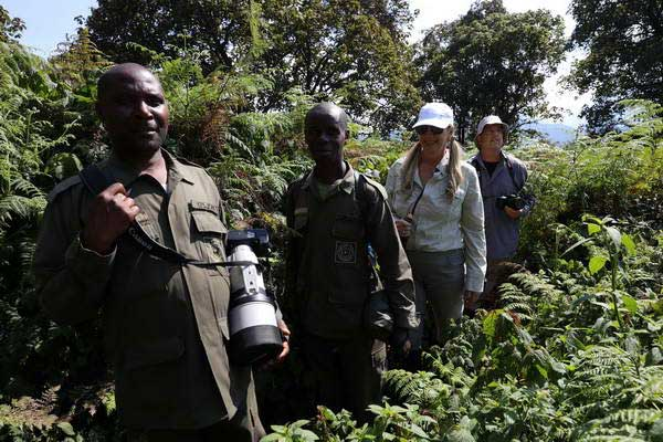 גורילות הרים ברואנדה
