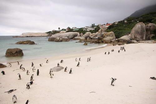 דרום אפריקה, טיול עם ילדים, פינגווינים