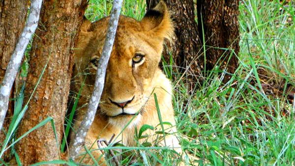 בעליחיים בדרום אפריקה
