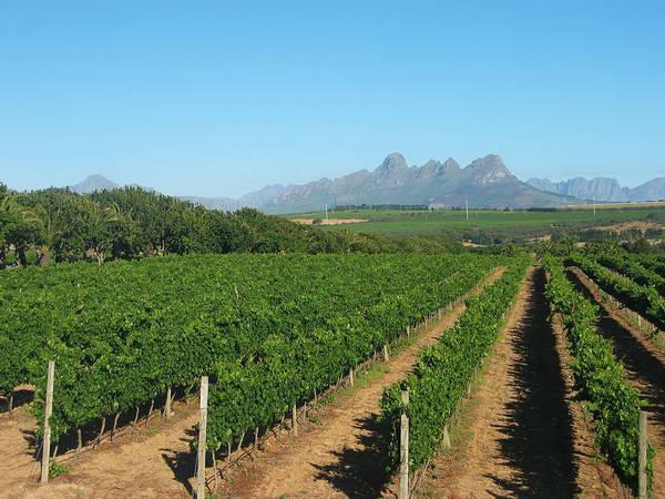 סטלנבוש ואזור היין של דרום אפריקה