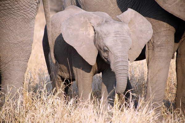 פארקים לאומיים בדרום אפריקה