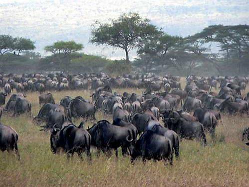 טיול לטנזניה, שמורת סרנגטי