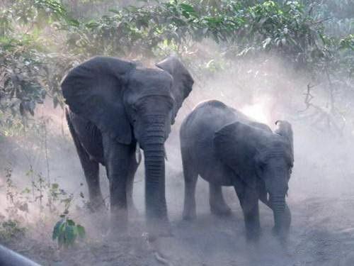 ספארי קמפינג בטנזניה