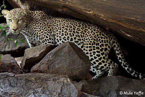 גן עדן לחובבי טבע, שמורות דרום טנזניה