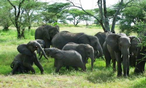 טיסה ישירה לטנזניה, ספארי בטנזניה