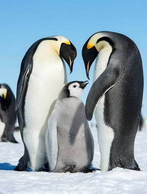פינגווינים, אנטארקטיקה
