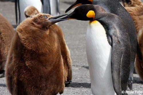 הפלגות לאנטארקטיקה, בעלי חיים