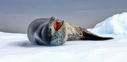 שייט לאנטארקטיקה