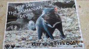 השד הטסמני, אוסטרליה