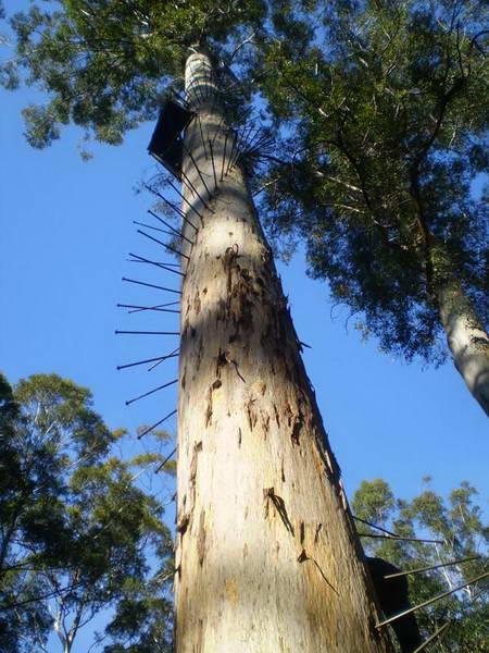 מערב אוסטרליה, עמק הענקים