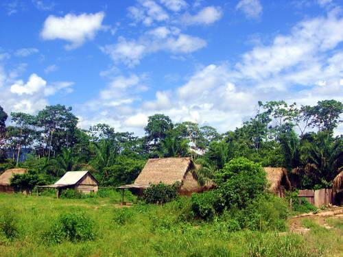 בקתות קש בג'ונגל בבוליביה