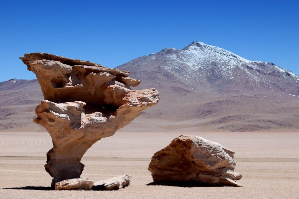 עץ האבן בפארק הסלעים במדבר הסלאר, בוליביה