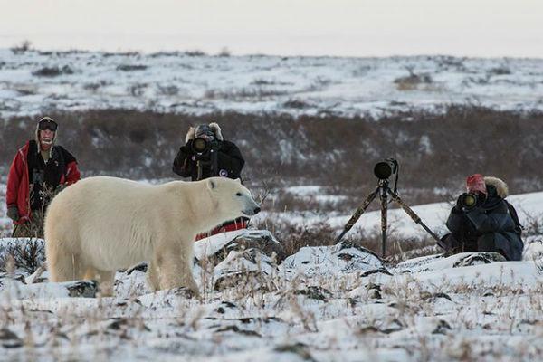 טיול לצ'רצ'יל בעקבות דובי קוטב