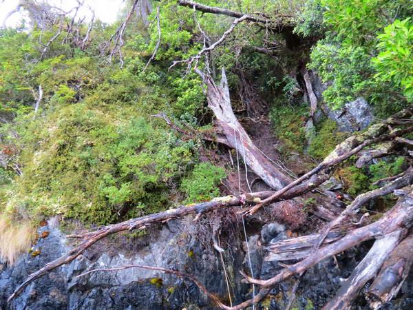טרק צלב הימים, הליכה ביער סבוך