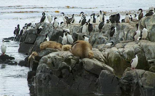 פינגווינים, ארץ האש, צ'ילה