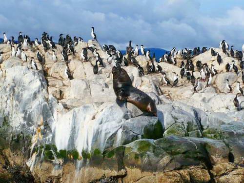 צ'ילה, פונטו ארנס, פינגווינים