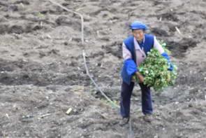 האפ-ויי גסטהאוס, רוץ דילוג הנמר, יונאן, סין