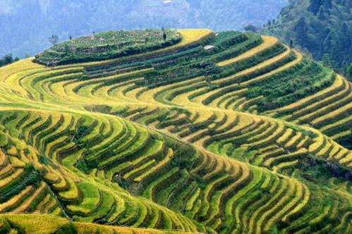 דוגמת ניצול גבעה עד לראשה בטרסות בלונג-ג'י טיטיאן, סין