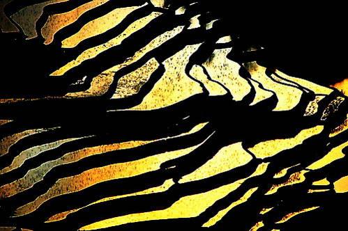 מראת הזהב השבורה של שקיעה בשדות באדה