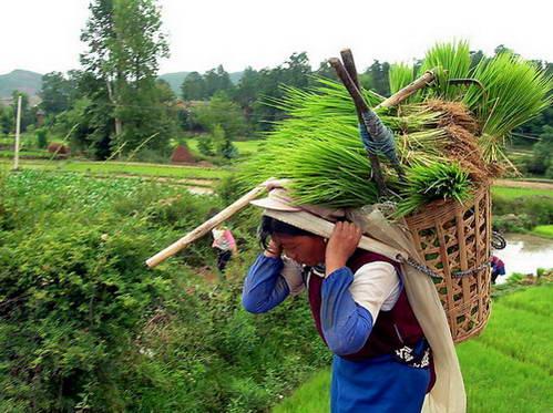 נשות הנאש'י, סין, GoTravel