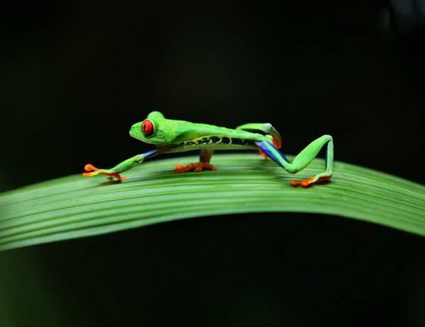 קוסטה ריקה, חוות הצפרדעים