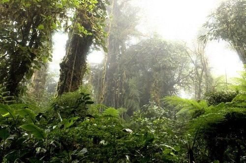 יער הגשם, קוסטה ריקה
