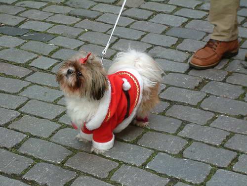 שווקי חג המולד, גרמניה