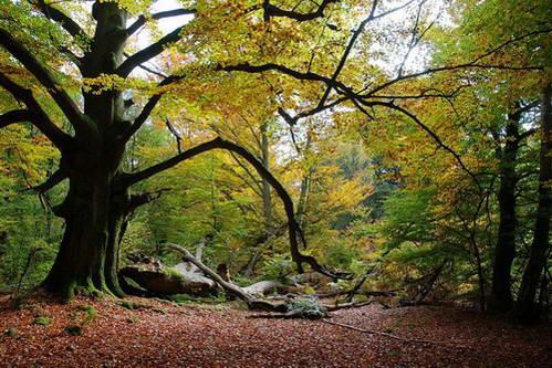 יער ריינהרדסוואלד, צפון גרמניה