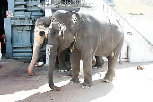 פילים המברכים את המאמינים בשערי המקדש