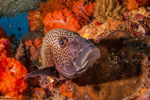 ספארי צלילה באינדונזיה