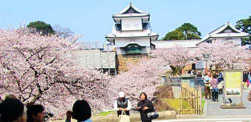 יפן, פריחת הדובדבן