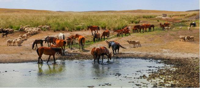 קזחסטן - מרחבים עצומים, סוסי פרא וצאן רועה