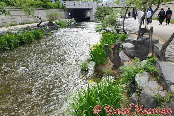 קוריאה, טיול בסיאול - תושבים מסייעים ברחוב
