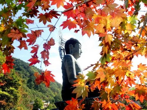 שמורת הר סוראק, דרום קוריאה
