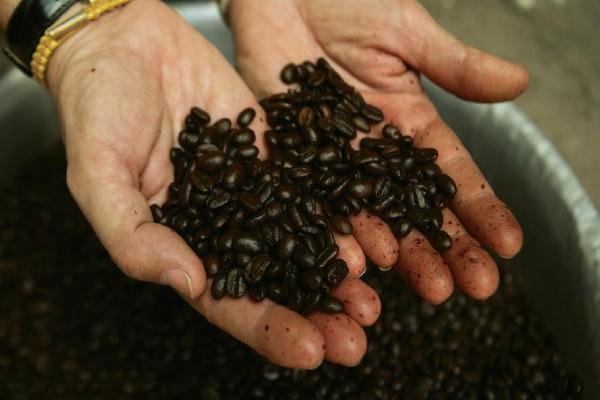 קפה לאוטי איכותי