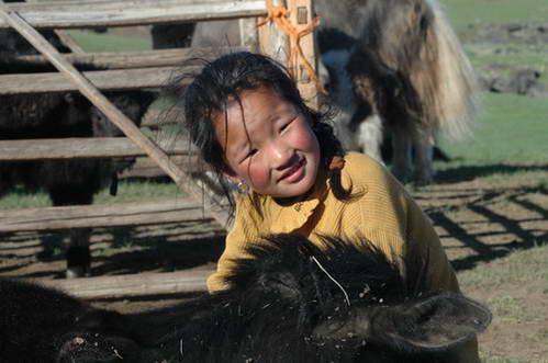 ילדה מונגולית במכלאת היאקים של משפחתה