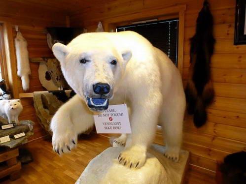 דוב הקוטב, שפיצברגן, איי סבאלברד