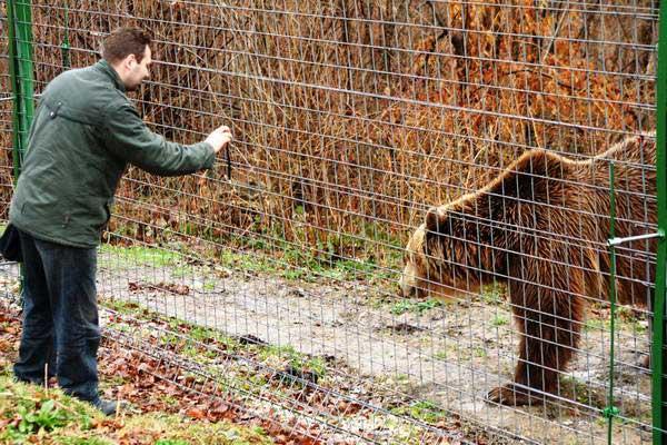 טיול ג'יפים ברומניה, פארק הדובים