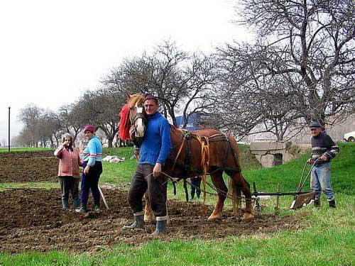 רומניה, עבודה בשדות