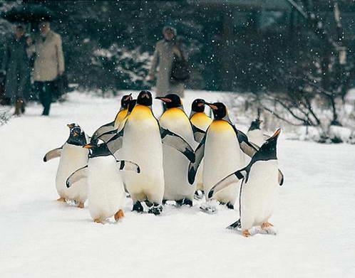 תושבי גן החיות של באזל
