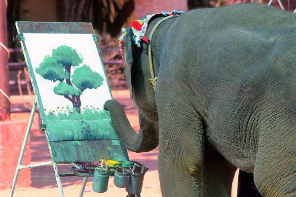 פילים בתאילנד