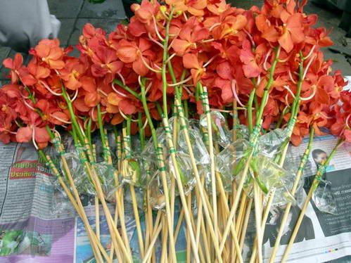 שווקים בתאילנד, סחלבים