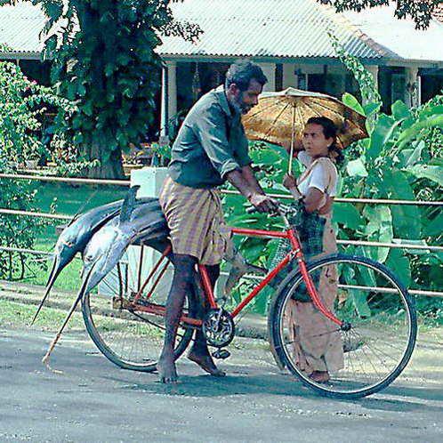 דרך מכירה ייחודית של דגים היא במעבר מבית לבית עם הסחורה, בדוכן נייד או על סבל של אופניים